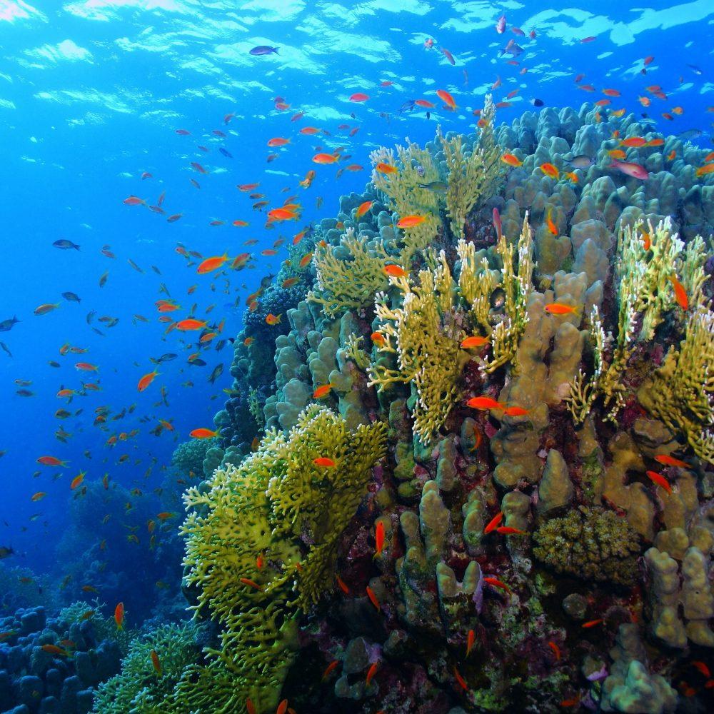 Snorkelen in Hurghada