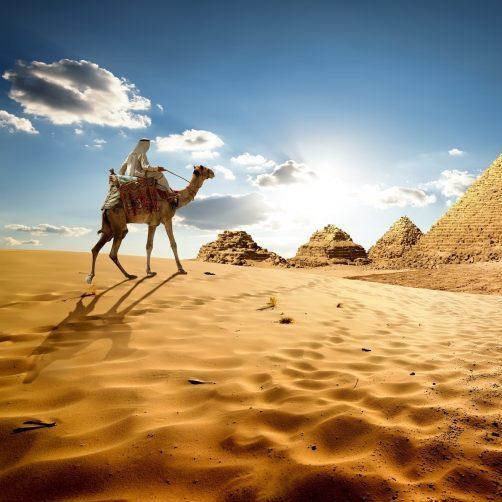 egypte-kameel